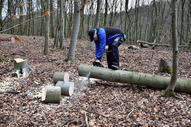 lumberjack-2146515_960_720.jpg
